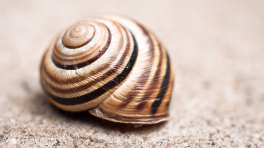Mollusk inspires latest break through in Li-ion technology